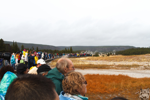 Old Faithful Crowd 1